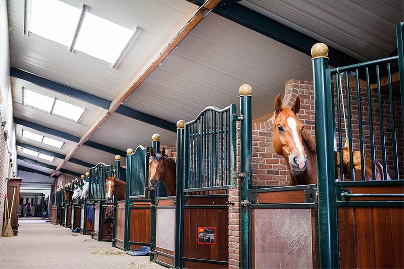 Dressage-Stable_NL_03